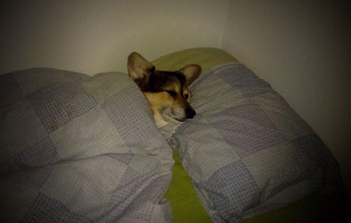 Dogs Can Like Pilllows And Blankets Also…