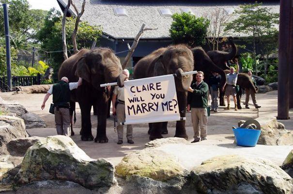 Jumbo Elephant Proposal