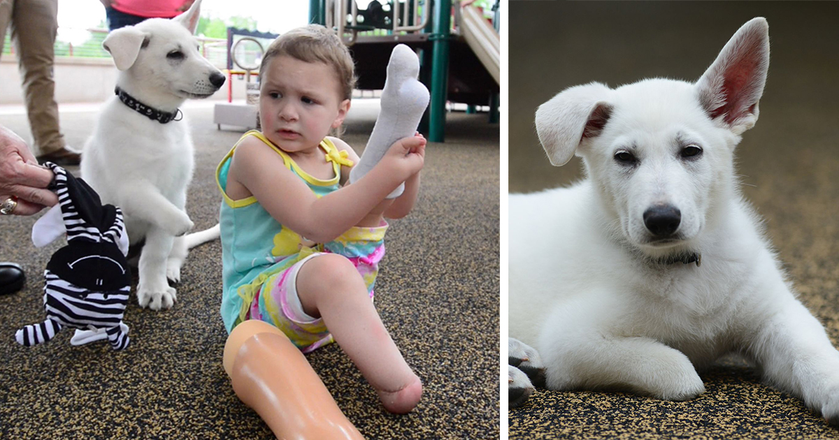 3-Year-Old Girl Without Feet Receives A Puppy Without A Paw   Bored Panda