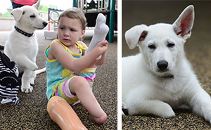 3-Year-Old Girl Without Feet Receives A Puppy Without A Paw