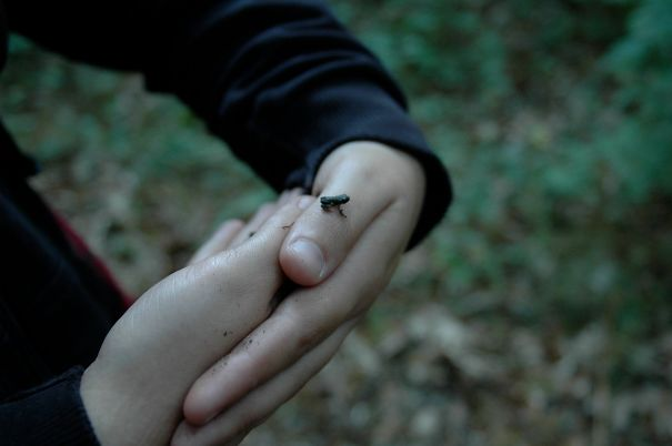Tiniest Frog Ever
