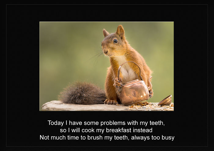 World Famous Red Squirrel Tells Her Story