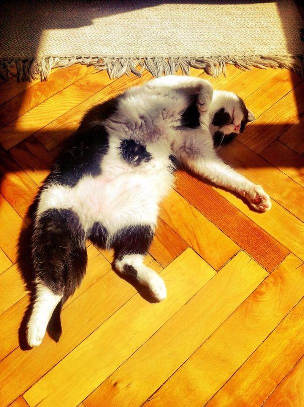 Belly Sunshine Sleep