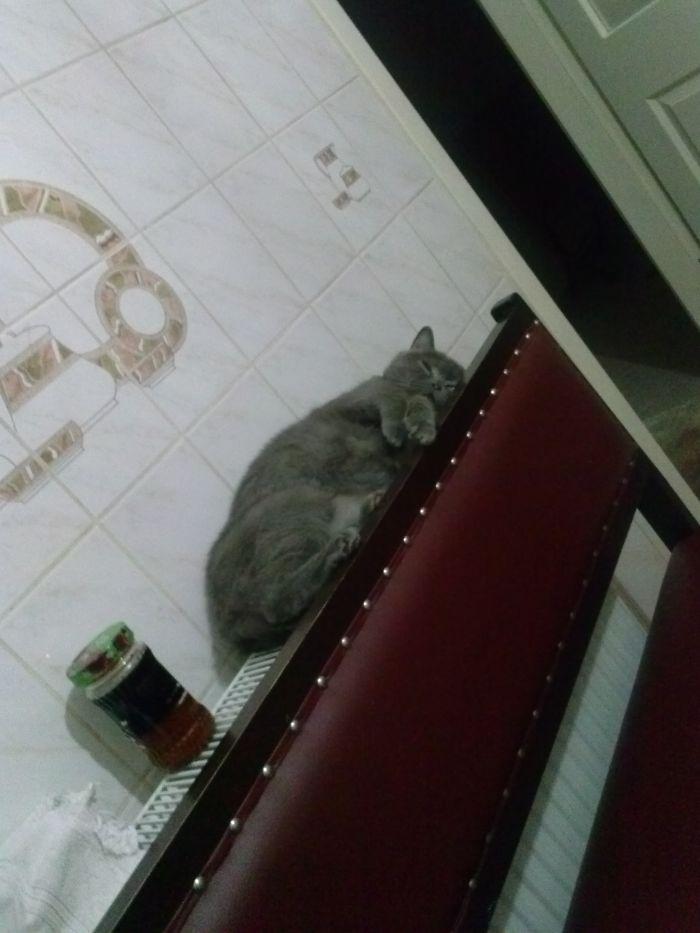 Radiator Bed :)