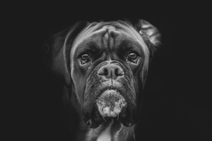 I Combined Love For Animals And Photography In These Pet Portraits
