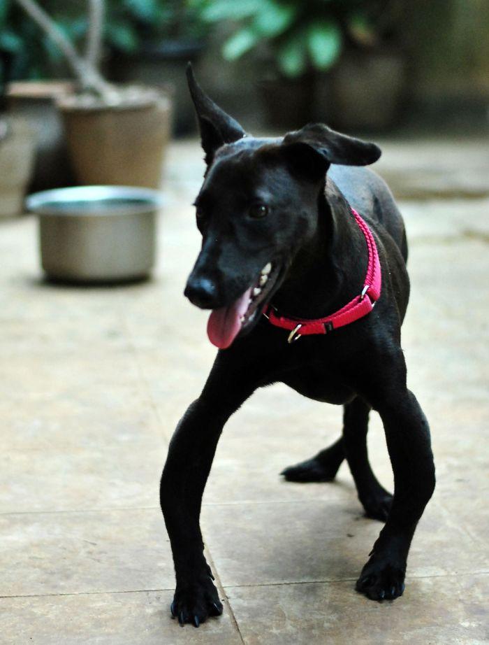 I Photograph Rescue Animals In Bangalore, India