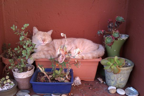 Flower Pot Naps