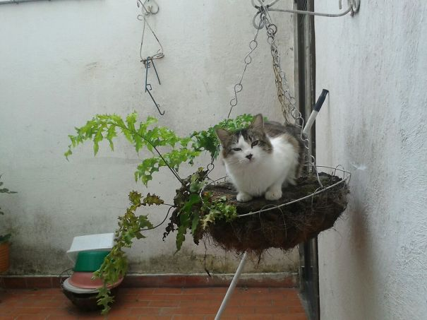 Panthro Enjoys Heights From Grandma's Pot!
