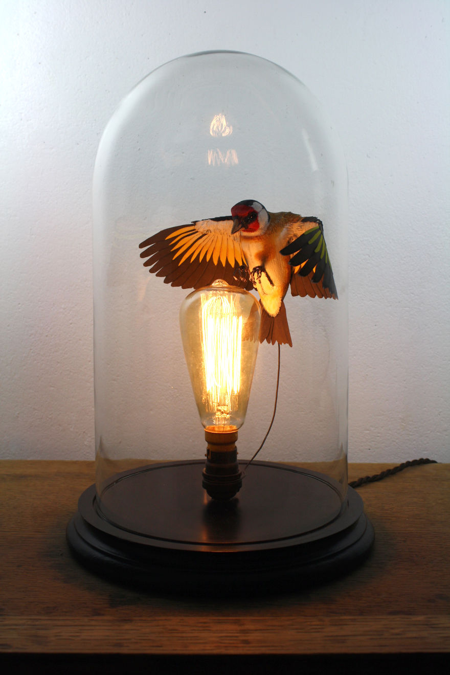 Goldfinch In Bell Jar With Light