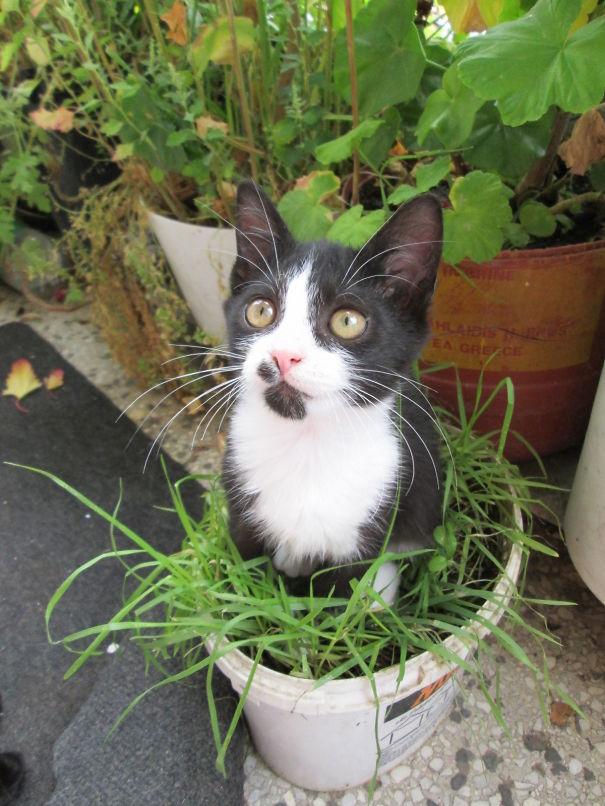My Special Plant- Boško