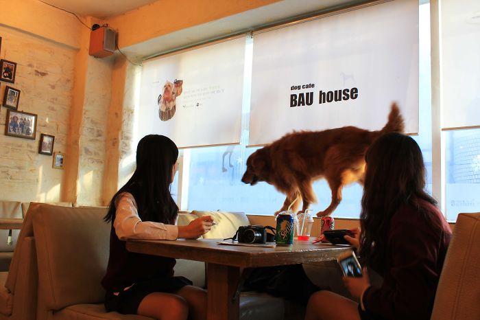 Bau House
