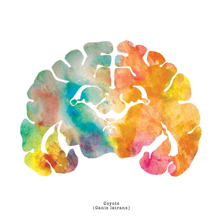 I Watercolor Animal Brain Scans Bored Panda