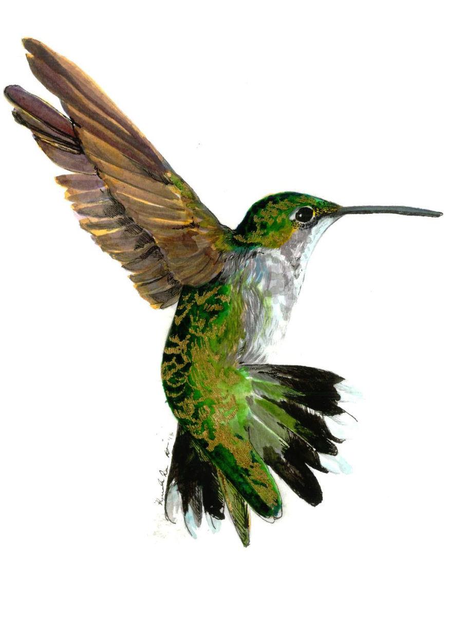 Hummingbird - Wikipedia
