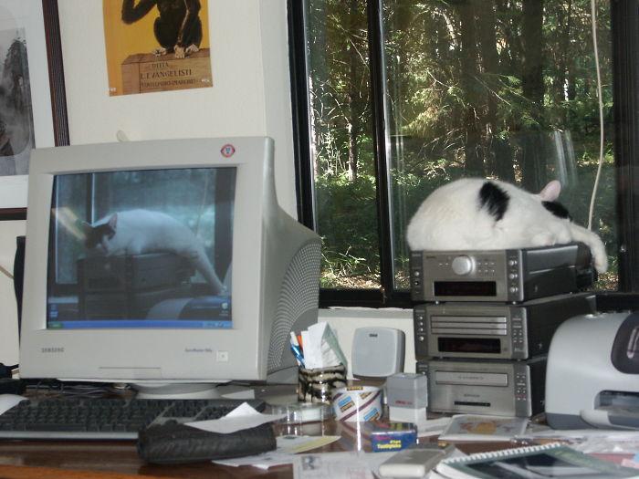 Moochie The Cat