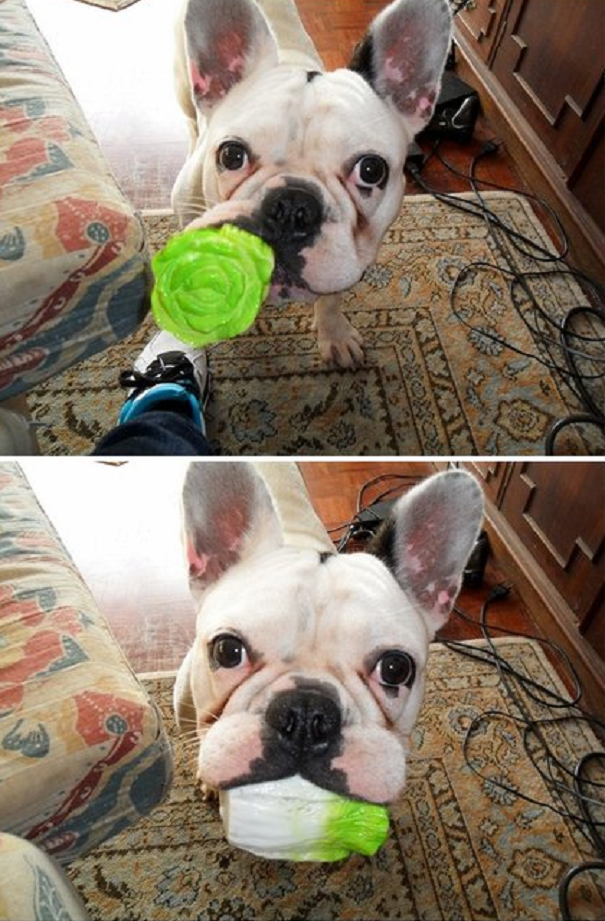 A Dog That Loves His Veggies.