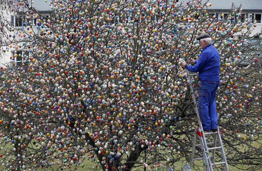 OSTERN IN DEUTSCHLAND Most-beautiful-Easter-tree.-Decorated-with-10000-eggs.-__880