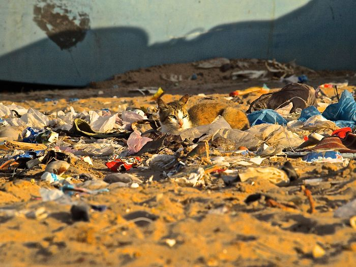 Cat And Trash At A Beautiful Beach In The Westsahara, Morocco