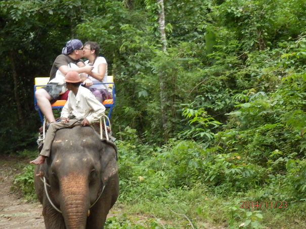 Marriage Proposal On The Back Of An Elephant, Thailand, 23rd Of November 2014