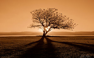 It's Ok To Stand Alone: I Take Pictures Of Lone Trees