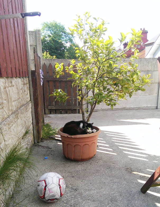 I Was Sitting In My Garden And I Noticed Something In The Flower Pot.i Don't Own A Cat