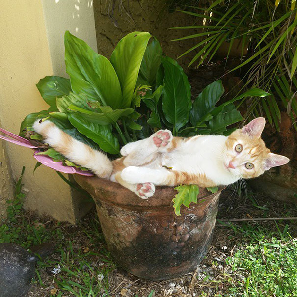 They Told Me I Could Become Anything So I Became A Plant