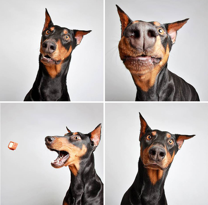 Cute Shelter Dog Photobooth Pics Help Them Find Forever Homes ...