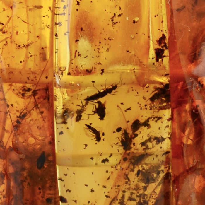 Insect Inclusion Baltic Amber