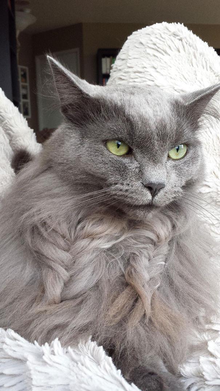 Creative Cat Fur Plait