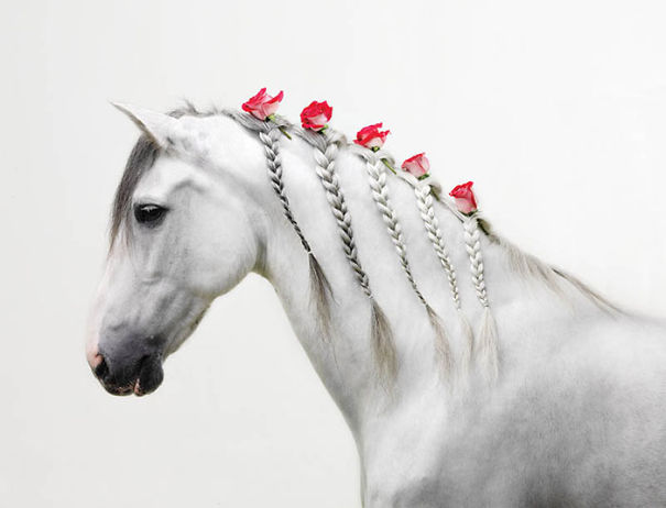 Braids With Roses