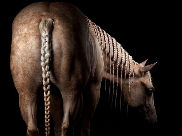 Long Horse Plaits