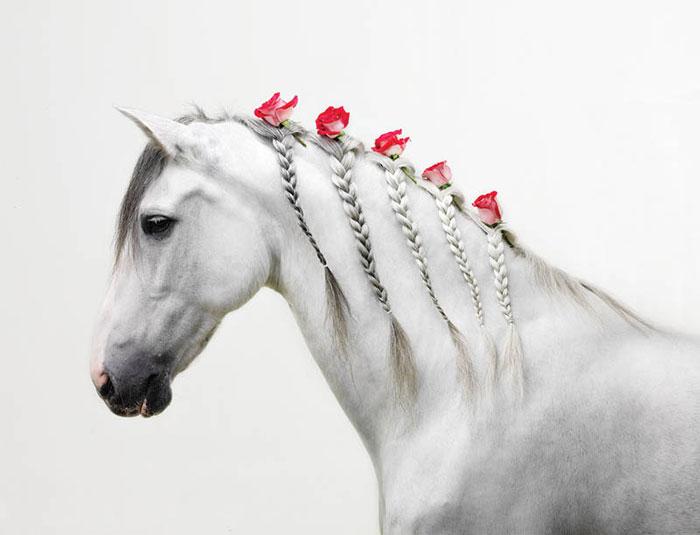 14 Fun Pet Braids