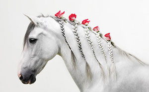 10+ Animal Braids For All Lengths, Genders And Species