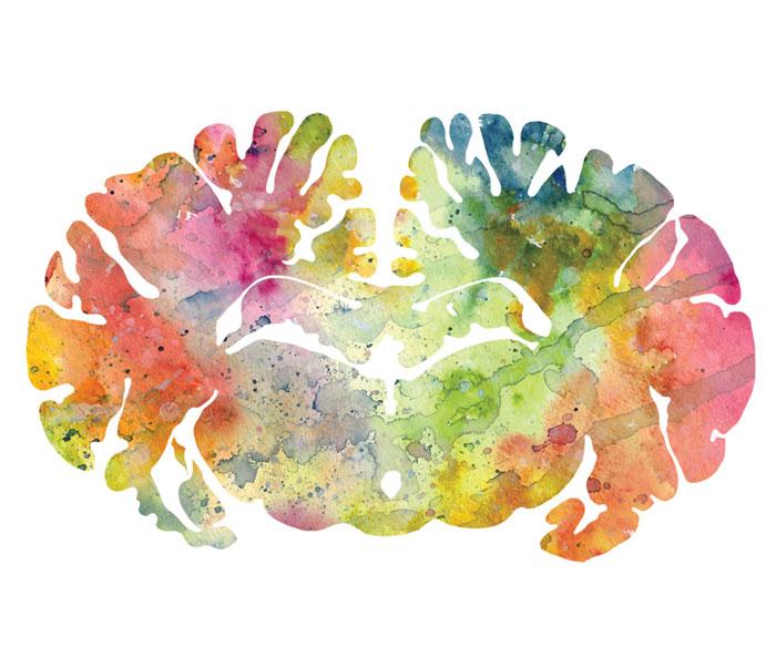 I Watercolor Animal Brain Scans
