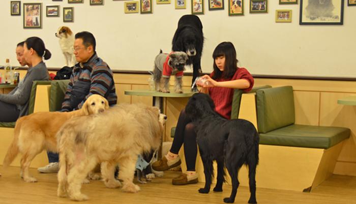 Bau House Dog Cafe In Seoul