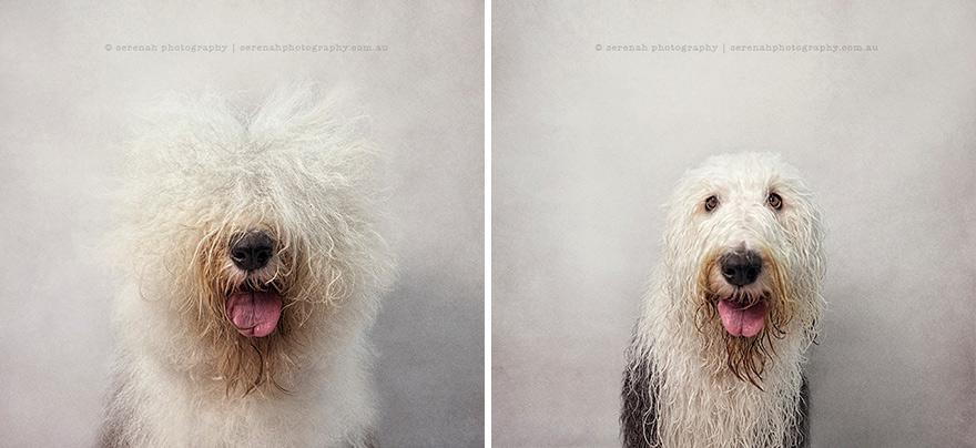retratos dos animais-dry-wet-dog-serenah-hodson-4