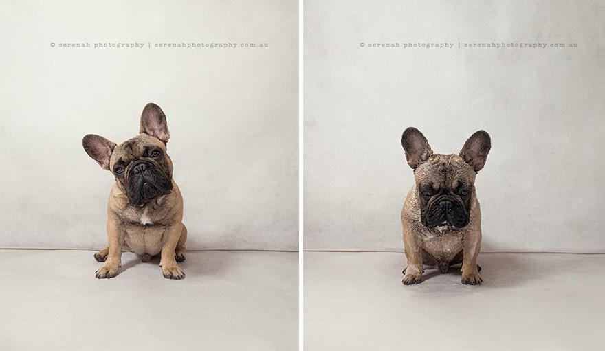 retratos dos animais-dry-wet-dog-serenah-hodson-9