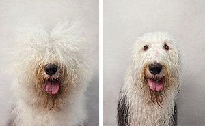 Dry Dog Wet Dog: Photographer Shoots Dogs Before And After Bath Time