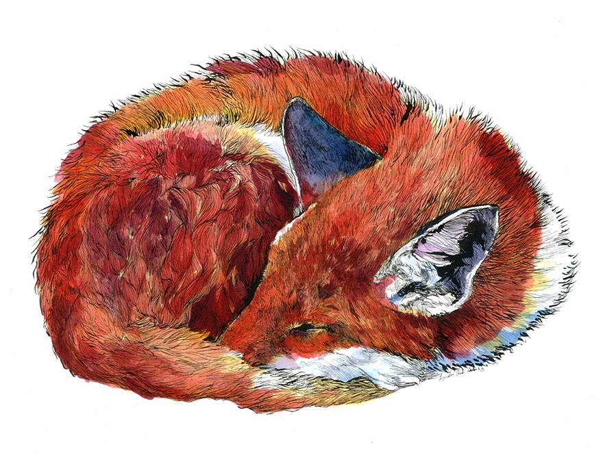 animal-watercolor-pencil-paintings-janie-stapleton-2