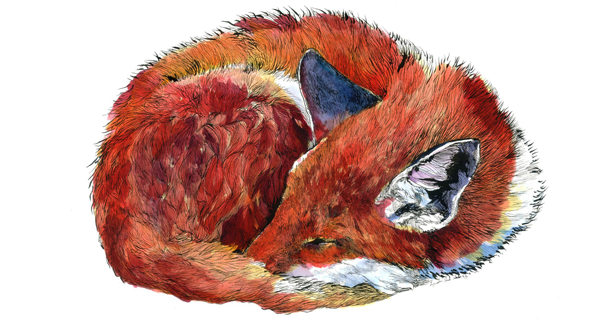 i draw animal watercolors inspired by my time spent living in the