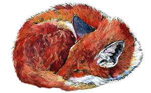 I Draw Animal Watercolors Inspired By My Time Spent Living In The Wild