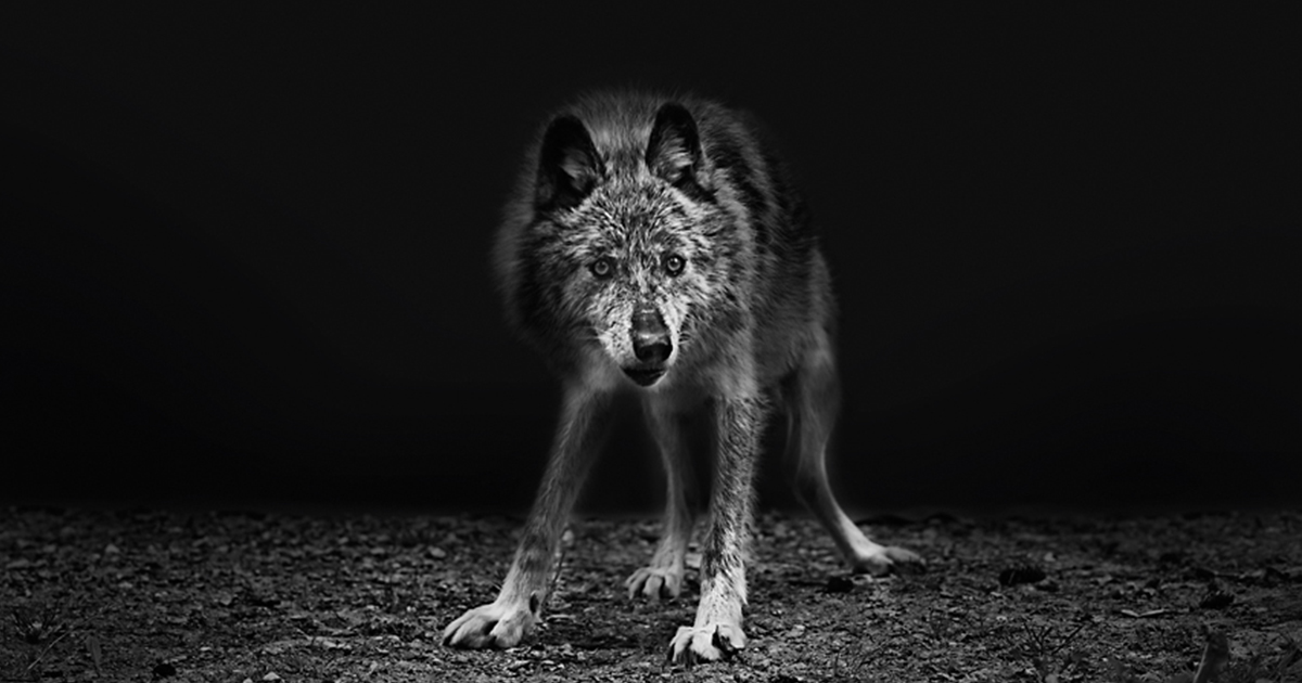 Best Black And White Wildlife Photography