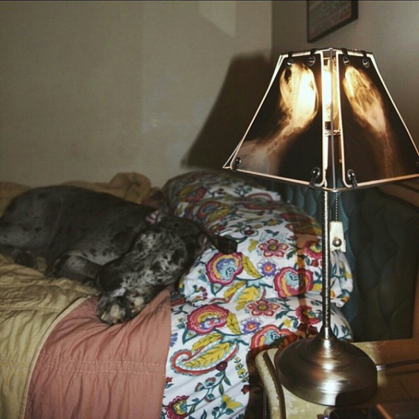 animal-x-ray-lamp-shade-veterinary-oncologist-spike-vain-8