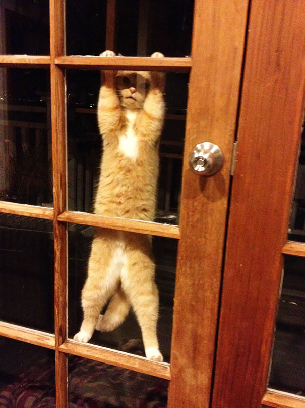 25 Pets That Need To Go Inside Right Now Bored Panda