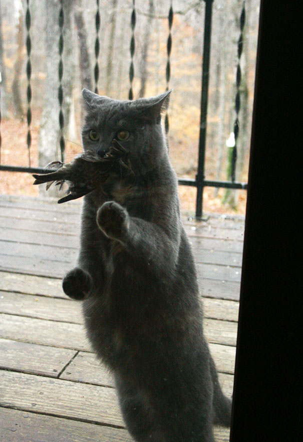 Why Wont You Let Me In? I Brought You A Present