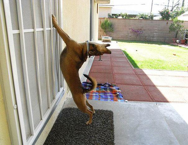 Oh God! Let Me In! Noooooooooow!!!!