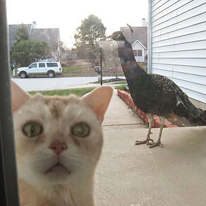 Let Me In Please, I'm Not The Mighty Hunter I Thought I Was