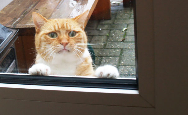 Please Let Me In! There's Liquid Torture Falling From The Sky!