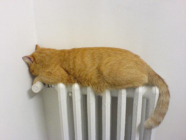 Warm Spot