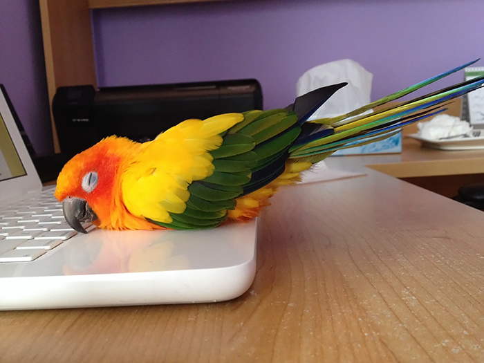 214 Animals That Love Warmth More Than Anything