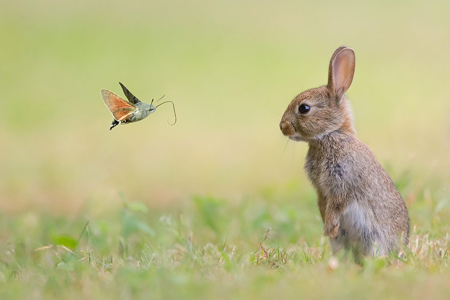 Rabbit And The Butterfly